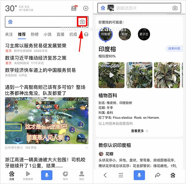 查植物品种的app